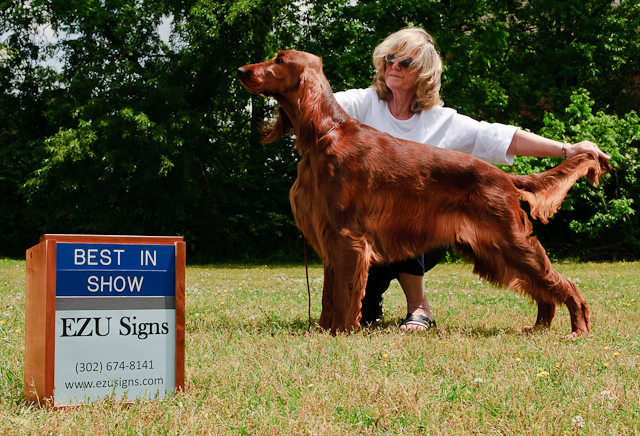 Dog Show Photography Signs with Box In Action